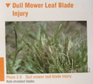 Dull Mower Blade Injury